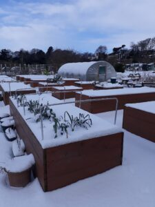 Snow at Ravenscraig in February