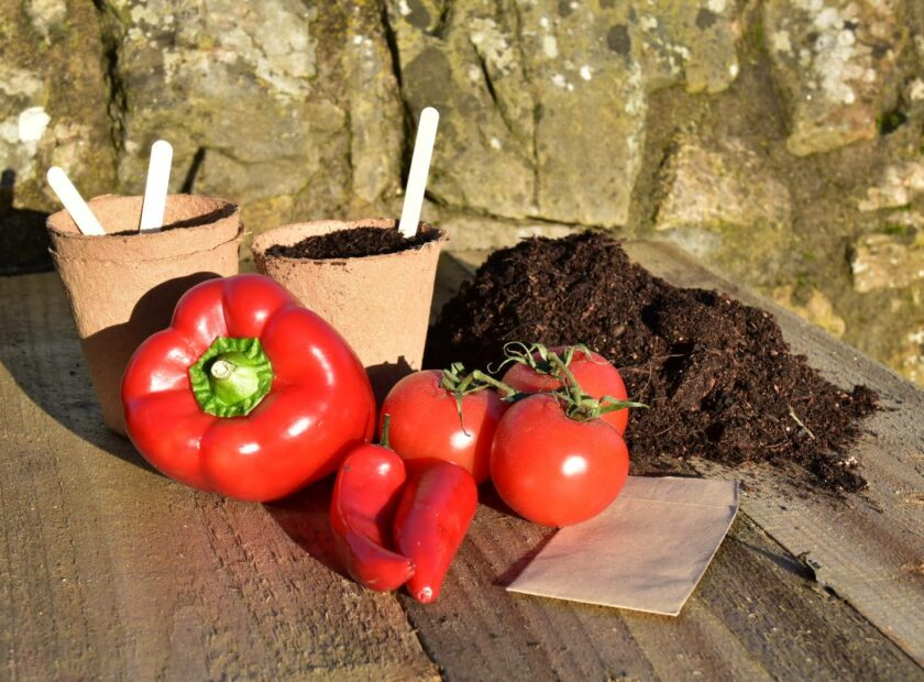 grown your own at home kit - tomatoes, chillies and peppers