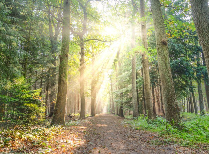 how winterwatch can help you appreciate nature