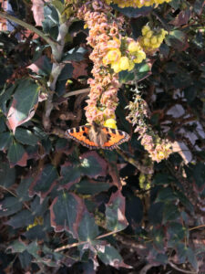 Woodland walk - Painted lady butterfly, beautiful and mesmerising.