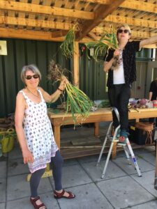 Vols hanging garlic - july at ravenscraig