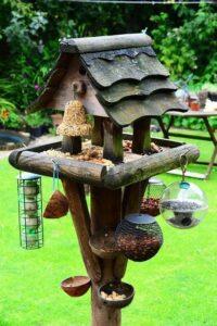 bird feeder - learning to love wildlife in the garden